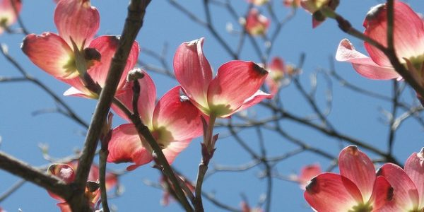 Image of Spring blossom and blue skies