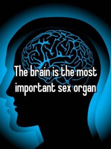 Image of the biggest sex organ of them all, the BRAIN.