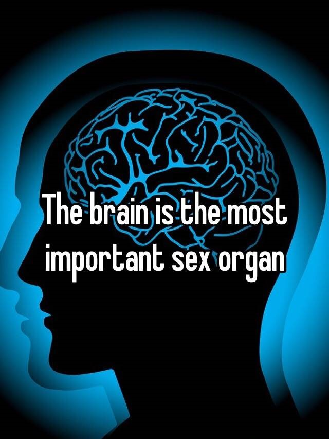 Why is Erotic Audio hotter than porn? Because the brain is the biggest sex organ. Image shows brain with caption